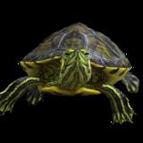 Bob Turtle